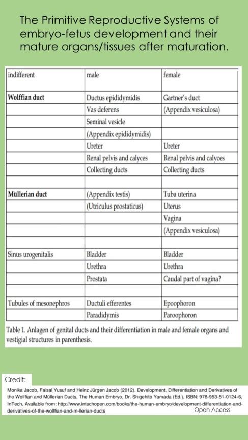 TablePrimitiveandMatureReproductiveOrgans